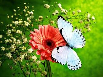 of Nature HD Butterfly Wallpapers Download Wallpapers in HD