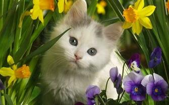 Cute Kitten   Kittens Wallpaper 16096569