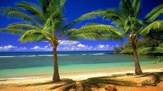 Pics Photos   Palm Tree Desktop Wallpaper Hd Wallpapers