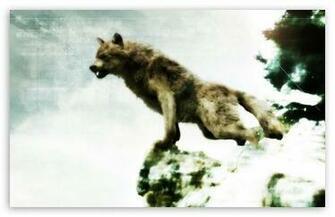Jacob black werewolf form HD desktop wallpaper High Definition