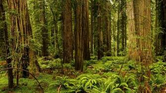 USA California Redwood National And State Parks forest trees