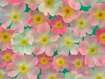 Flowers images pretty ness wallpaper photos 248091