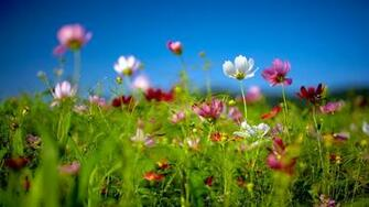 Spring wildflowers Best HD Windows 81 Theme