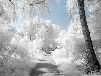 Beautiful Winter Wallpapers for Desktop wallpaper Beautiful Winter