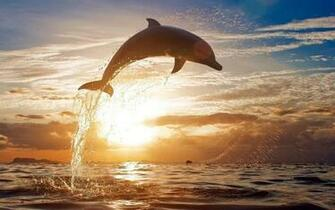 Dolphin Backgrounds wallpaper Dolphin Backgrounds hd wallpaper