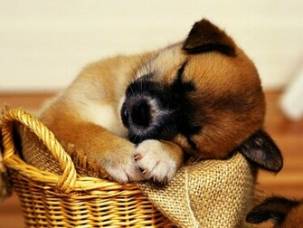 Cute Puppies HD Wallpapers Collection Desktop Wallpapers
