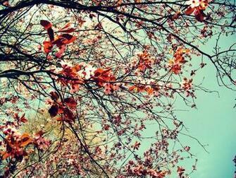 tumblr m9bh4qjsXF1rcw350o1 1280jpg