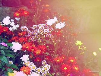 BeautyFul Flowers flowers background wallpapers
