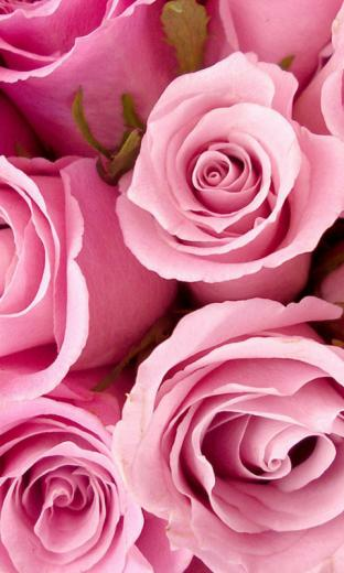 Roses Live Wallpapers Live wallpapers HD for Android software