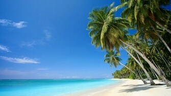 Wallpaper caribbean sea palm beach sea caribbean desktop wallpaper