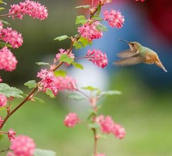 Description Bird and Flowersjpg
