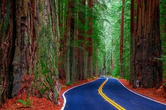 Images California USA Redwood State Park Nature Roads Forests Trees