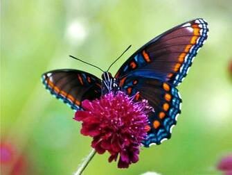 55 Colorful ButterflyHD Images Wallpapers Download