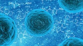 Genetically encoded sensor isolates hidden leukemic stem cells