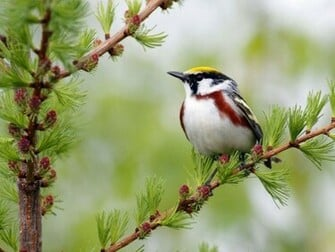 Beautiful Birds Wallpapers Pictures HD Wallpapers Pictures