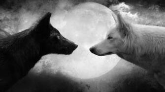 Black and White Wolf Pictures HD Wallpaper Black and White Wolf