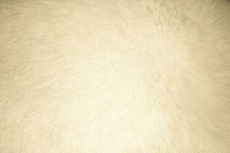 Wallpapers beige   Imagui