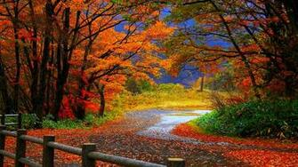 Autumn Tree in Fall HD Desktop Wallpaper Background download